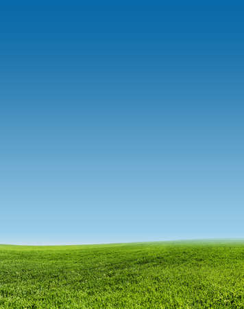 image of green grass field  and clear blue sky Stock Photo