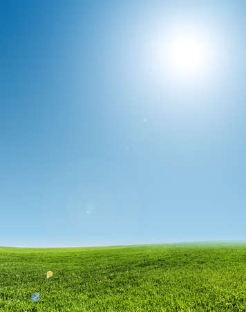field and sky: imagen del campo de hierba verde y el cielo azul claro Foto de archivo