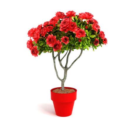 3d flower: 3d home plant on white background