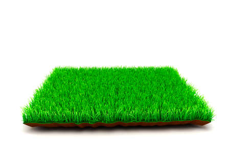 3d grass on white background photo