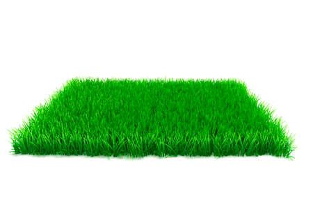 3d Gras auf weißem Hintergrund