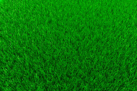 3d fresh grreen grass background photo