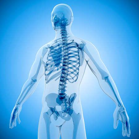 scheletro umano: Rendering 3D del corpo umano e scheletro, x-ray Archivio Fotografico
