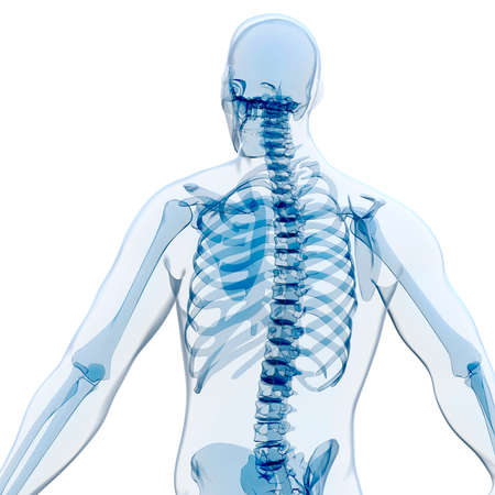 xray: 3d render of human body and skeleton, x-ray