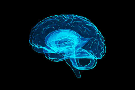 3d human brain illustration