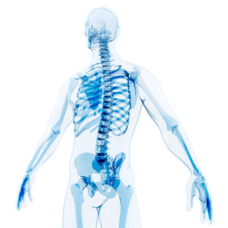 x stand: 3d render of human body and skeleton, x-ray