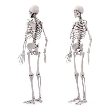 3d menselijke skelet op een witte achtergrond Stockfoto