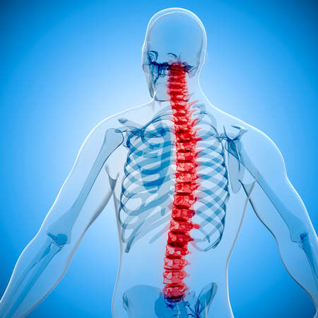 3D render van menselijk lichaam en skelet, x-ray Stockfoto - 53837491