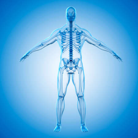x stand: 3d render of human body and skeleton