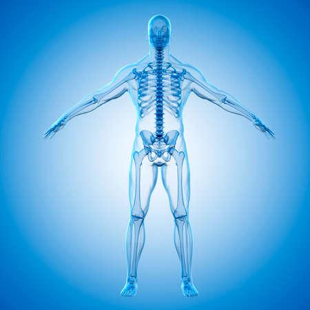 3D render van menselijk lichaam en skelet