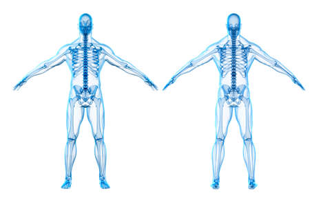 male anatomy: 3d render of human body and skeleton