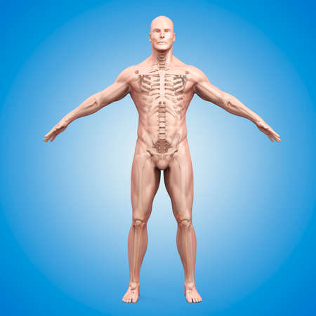 head injury: 3d render of human body and skeleton