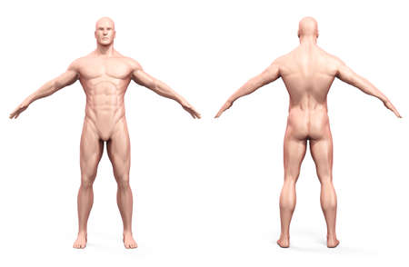 naked male body: 3d human body render