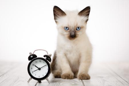 Cute kitten on a wooden white background and alarm clock. Fluffy kitten Imagens