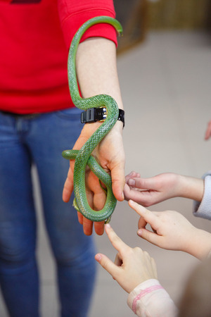 Animals in the Contact Zoo in the city. Feeding from the hands of pets. City leisure. Stockfoto