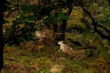 White Sheep in Green Mystery Forest Stock Photo