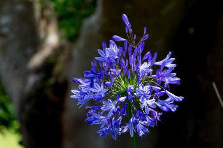 Blue Flower in the Sunlight
