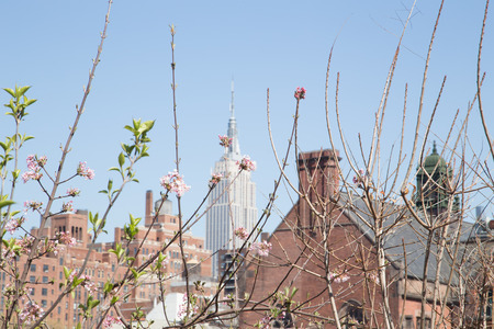 Spring Blossom in Front of New York Skyline