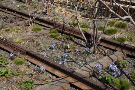 Old New York Railroad Being Recaptured by Nature