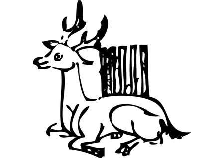 remains: deer
