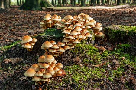 Group of mushrooms on an old tree stump