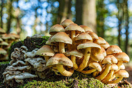 different types of mushrooms on an old tree stump