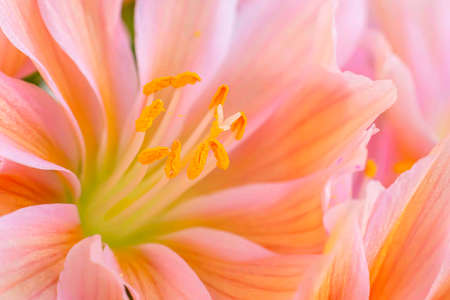 Details of the stamens and pistil of a beautiful flower of a succulent