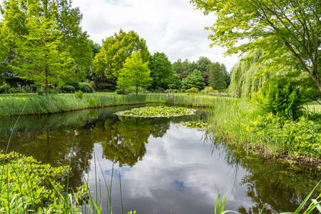 This pond with already, flowering water lilies and many other water plants is located in a beautifully designed garden near the village of Harkstede in Groningen