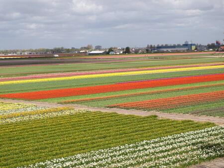 keukenhof: Keukenhof Tulip Garden in Holland