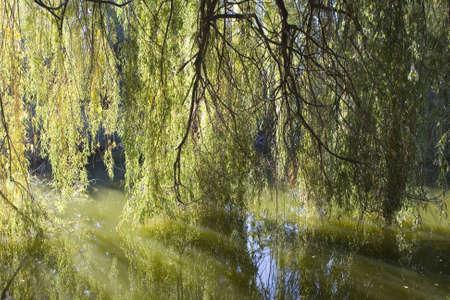 spiegelung: Naturlandschaft Stock Photo
