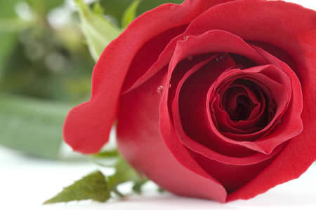 in liebe: red rose Stock Photo
