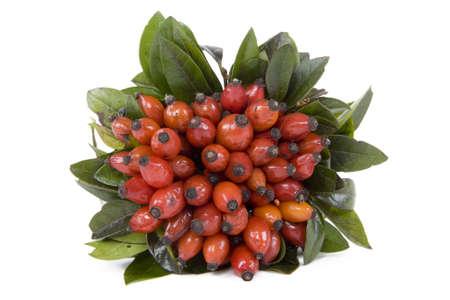 pflanze: Hagebutte eignet sich zum Tee kochen