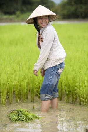 tierra fertil: El trabajo sobre el campo de arroz  Foto de archivo