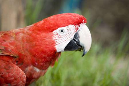 Beautiful parrot in a zoo in Bangkok