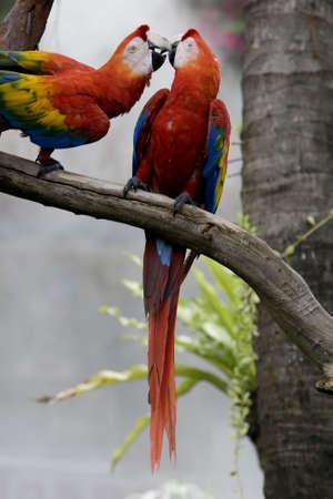 splendide: magnifique perroquet dans le d�sert
