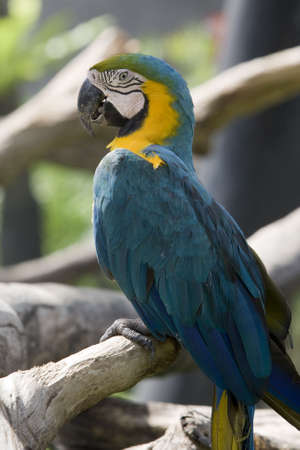 splendide: parrot splendide dans le d�sert.