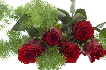 love proof: red roses against white background