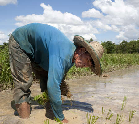 paddy field: Man works on the paddy field, Asia