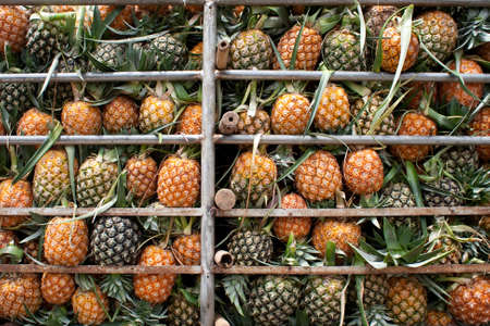 fruit trade: Transport of pineapple Stock Photo