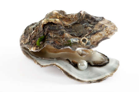 mussels: Oyster with pearl Stock Photo