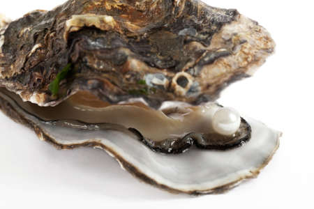 mussel: Oyster with pearl Stock Photo