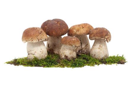 bolete: Bolete, group of mushrooms