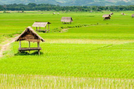 arrozal en luang namtha Valle, Laos Foto de archivo