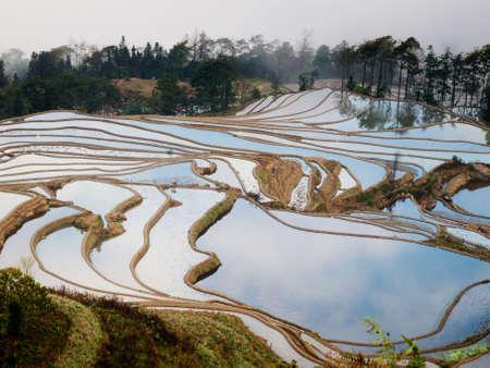 gradas: Hani terrazas de arroz de Yuanyang, China
