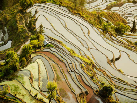 yuanyang: Hani Rice terraces Yuanyang, China