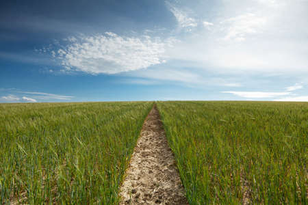 furrow: footpath to horizon