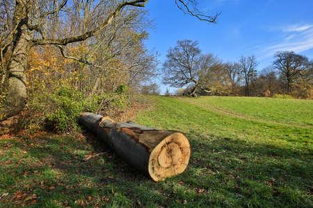 trunk  tree: Tronco de �rbol en el paisaje de oto�o
