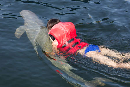 dolphin fish: Swimming with dolphin