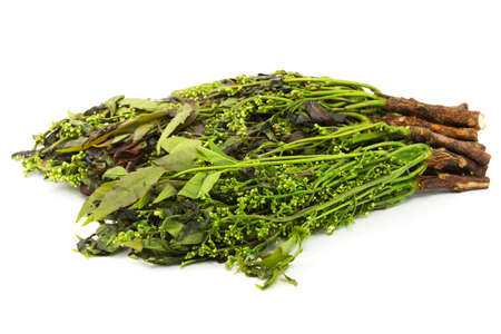 neem: Margosa plant from Neem Tree Stock Photo