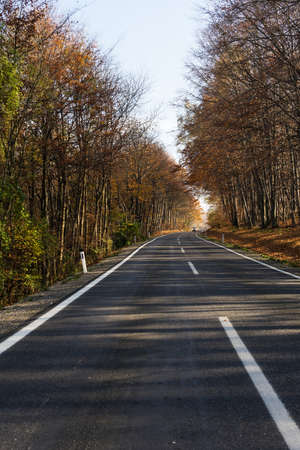 road autumnal: Road through autumnal forest
